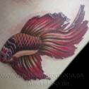 Tatuaje Pez Alfa