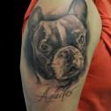 Tatuaje Bulldog Frances