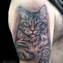 Tatuaje Gato Salvaje
